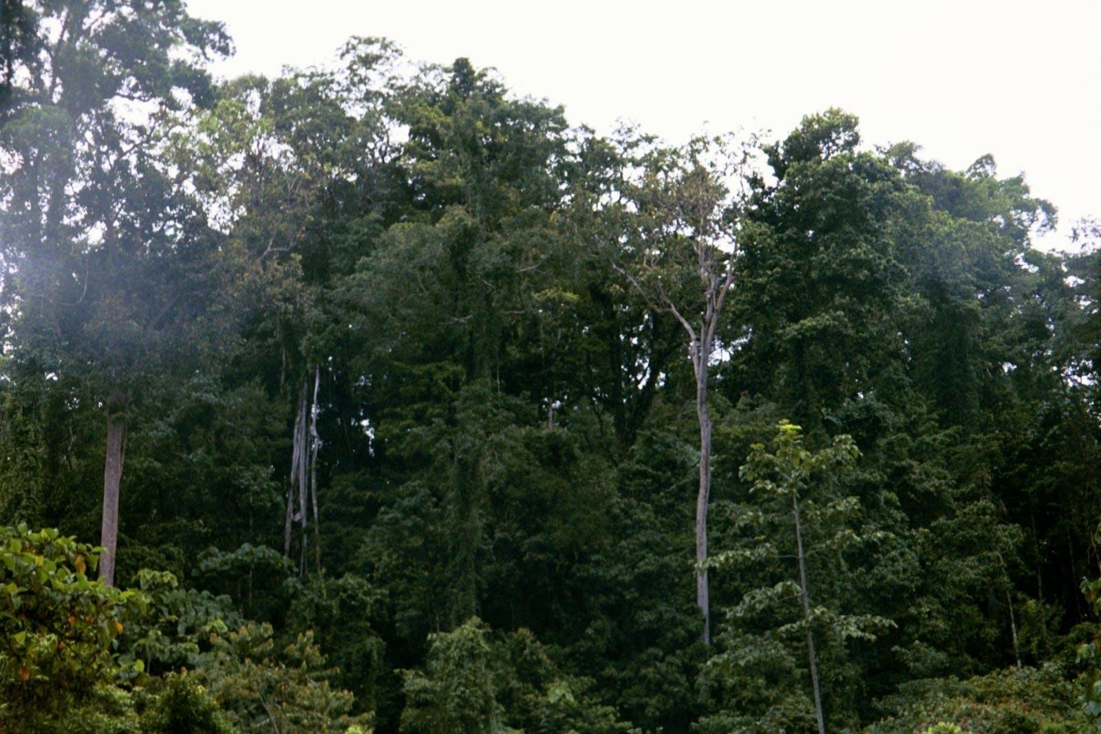 Biak-Numfoor Rainforests