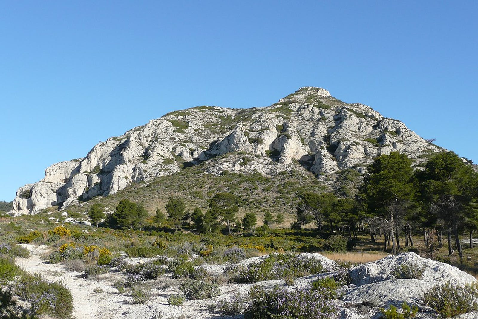 Northeastern Spain and Southern France Mediterranean Forests