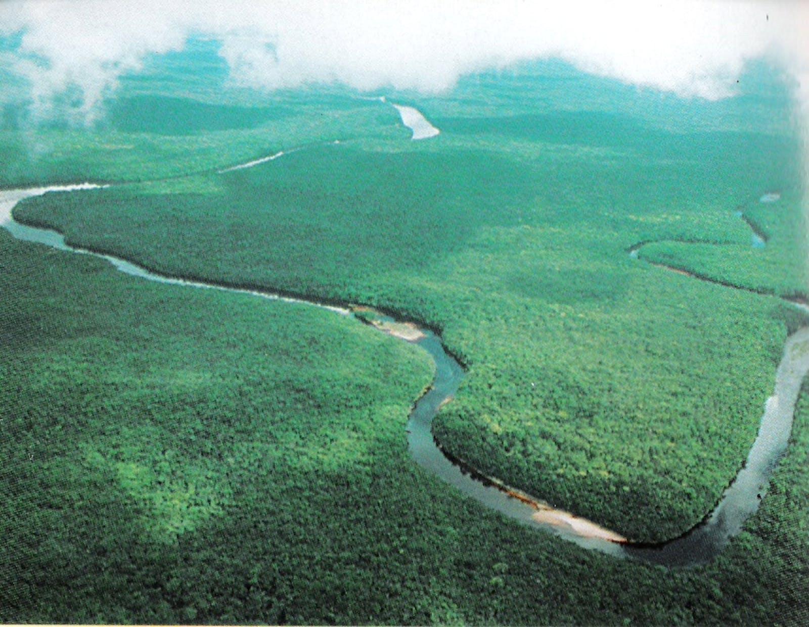 Orinoco Delta Swamp Forests