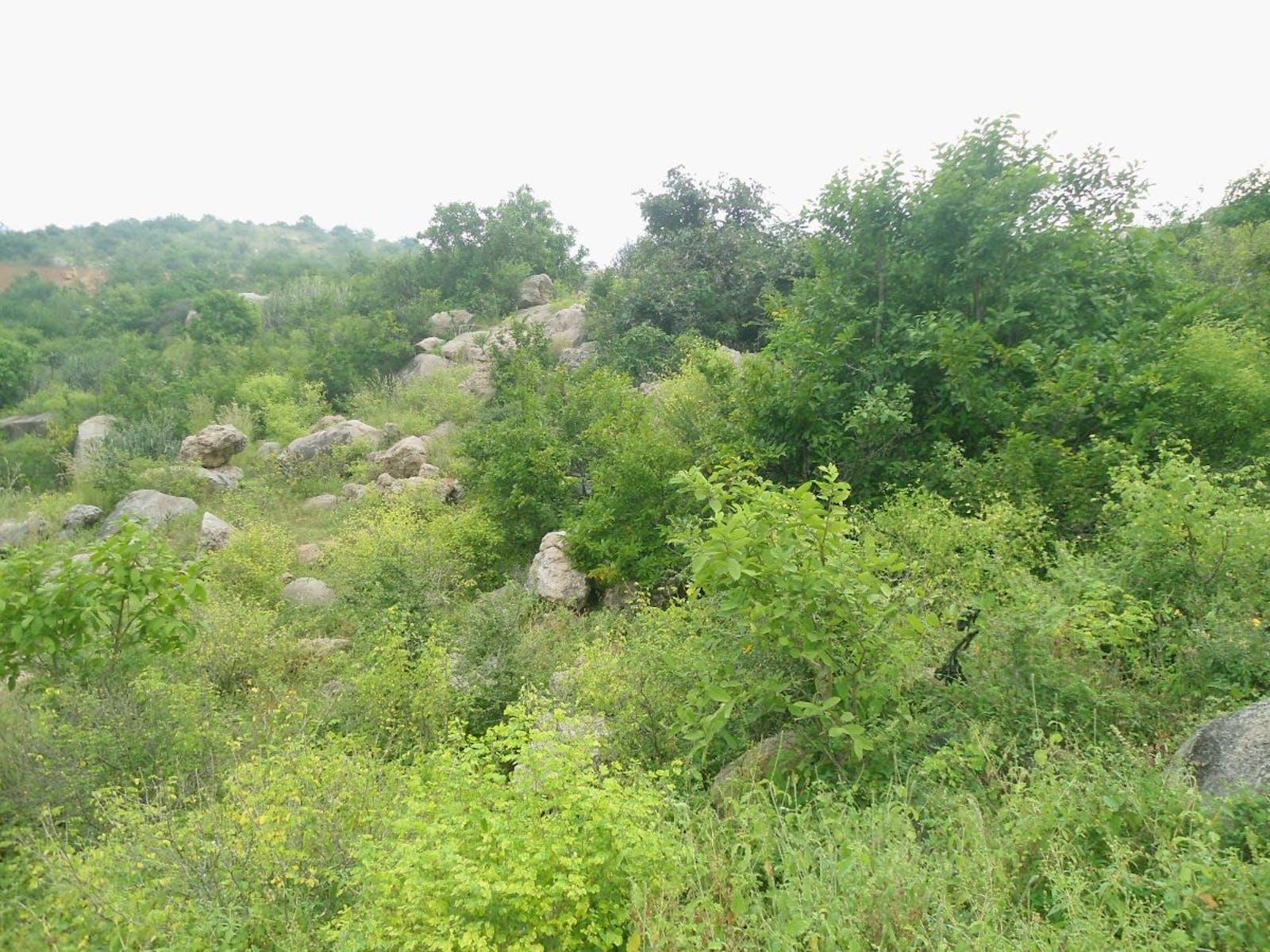 Deccan Thorn Scrub Forests