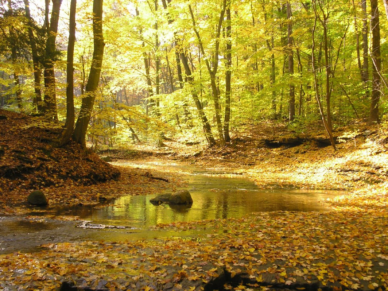 Southern Great Lakes Forests