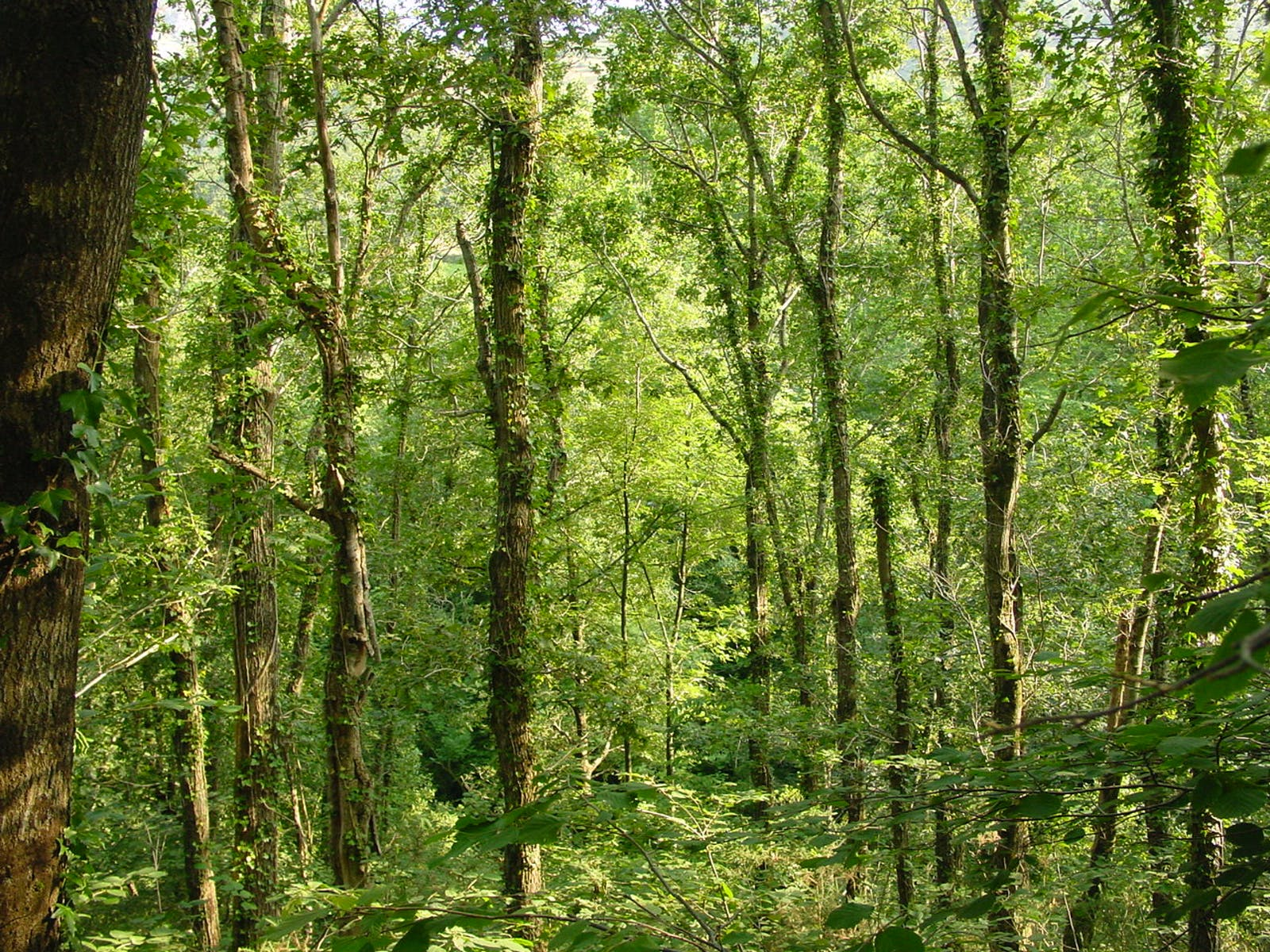 Cantabrian Mixed Forests