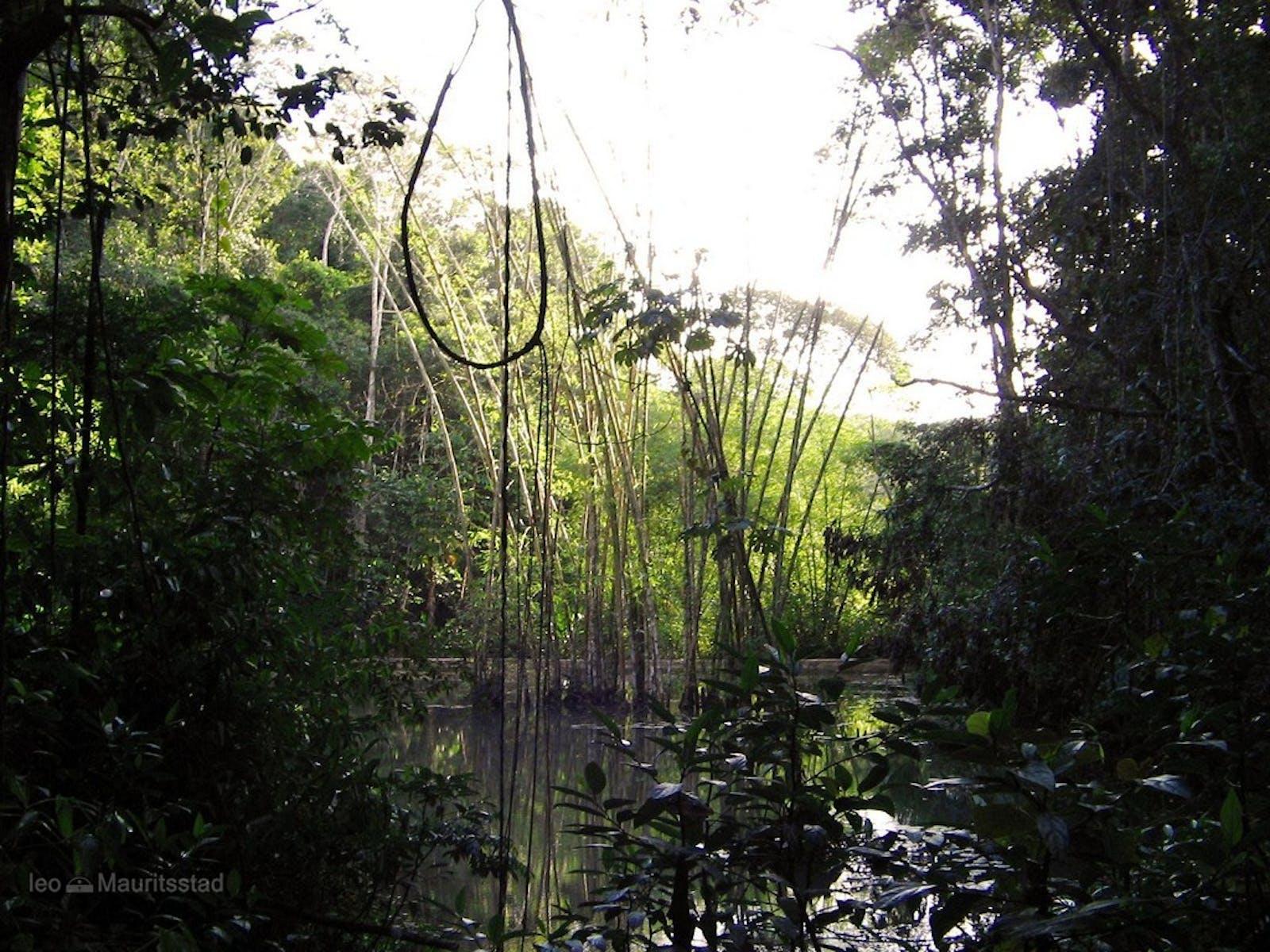 Pernambuco Coastal Forests