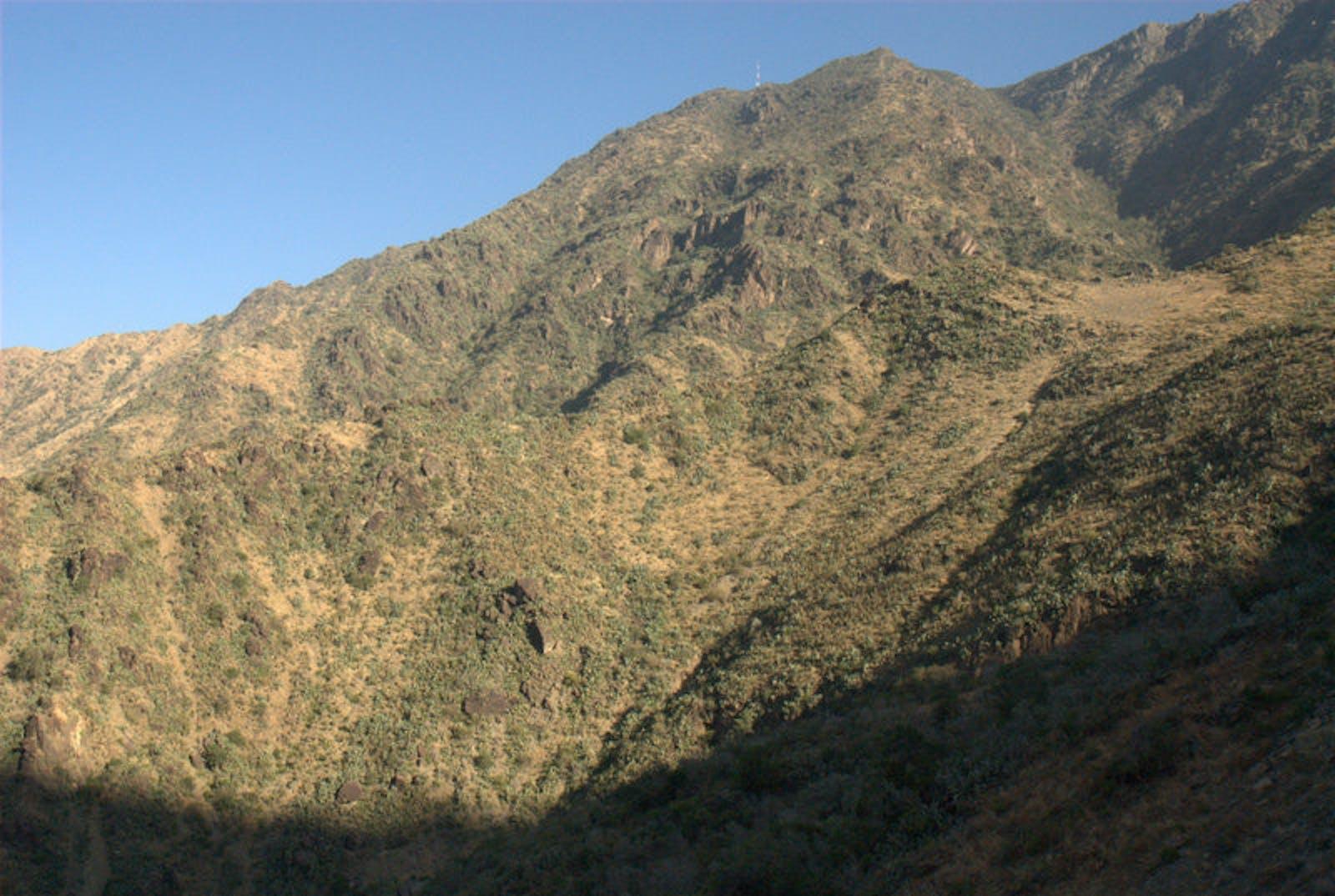 Southwest Arabian Escarpment Shrublands and Woodlands