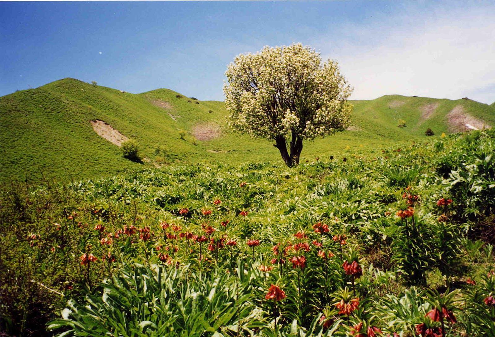 Pamir Alpine Desert and Tundra