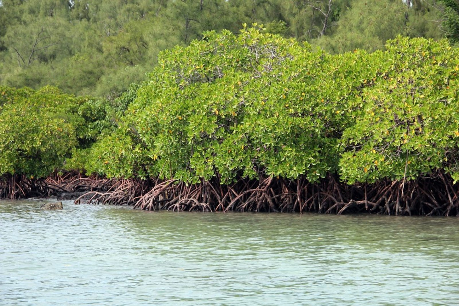 Southern Africa Mangroves
