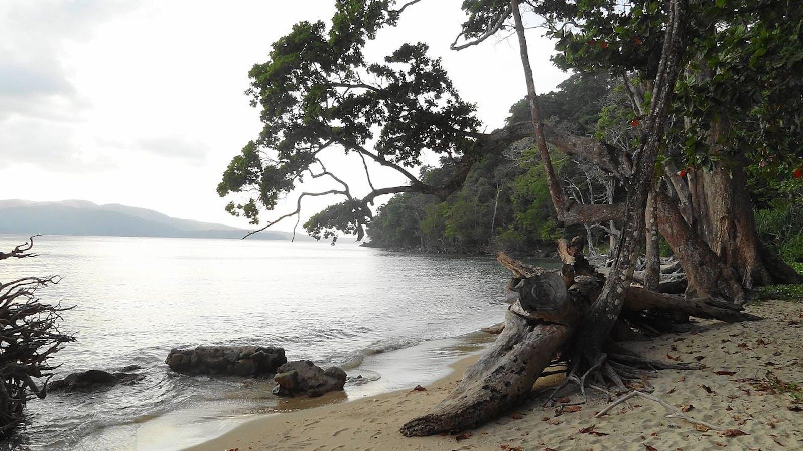 Andaman Islands Rainforests