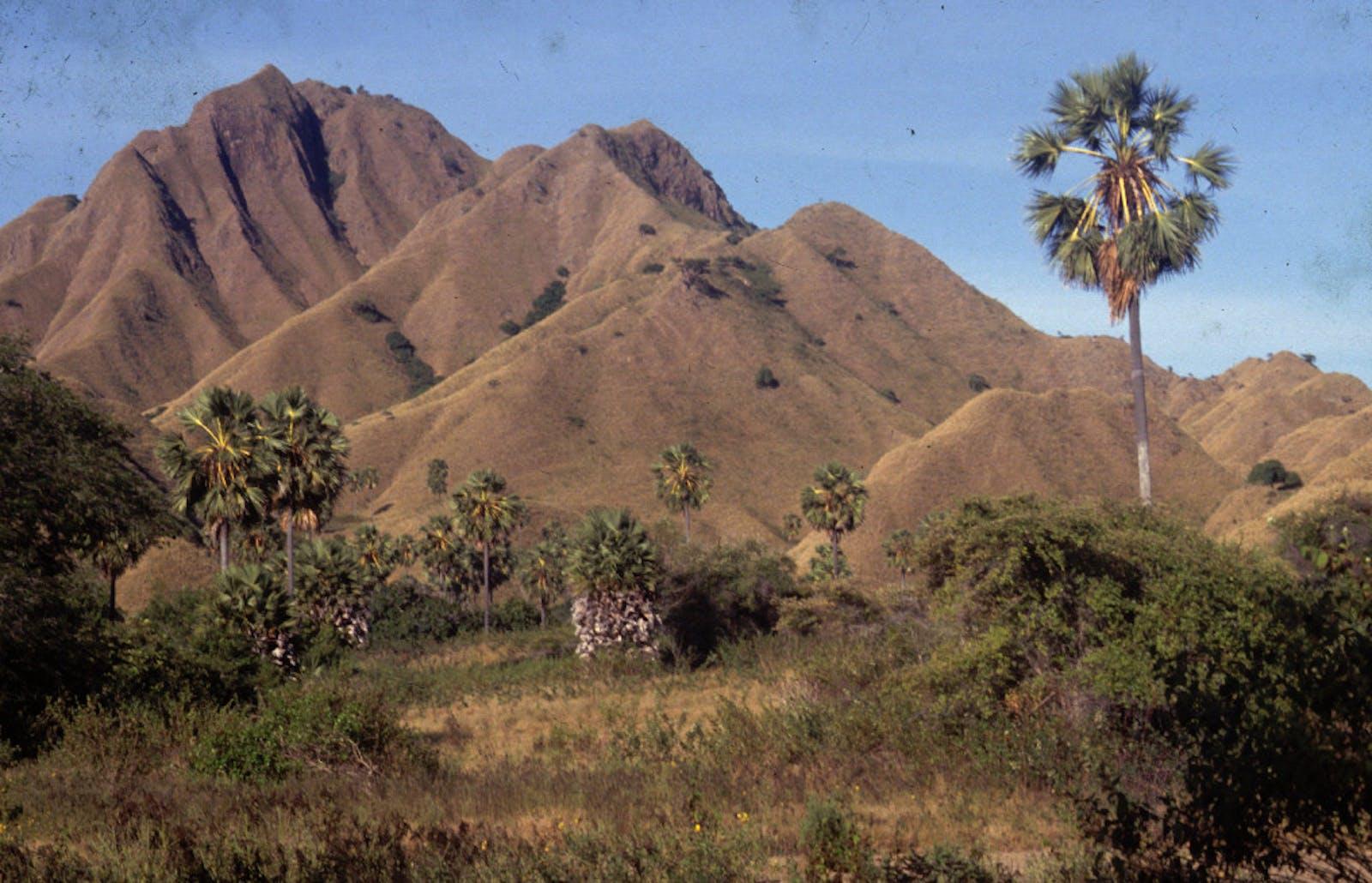 Lesser Sundas Deciduous Forests