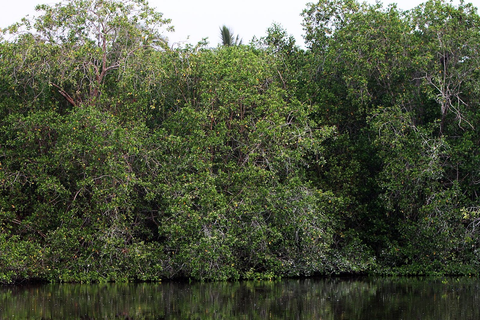 Northern Mesoamerican Pacific Mangroves