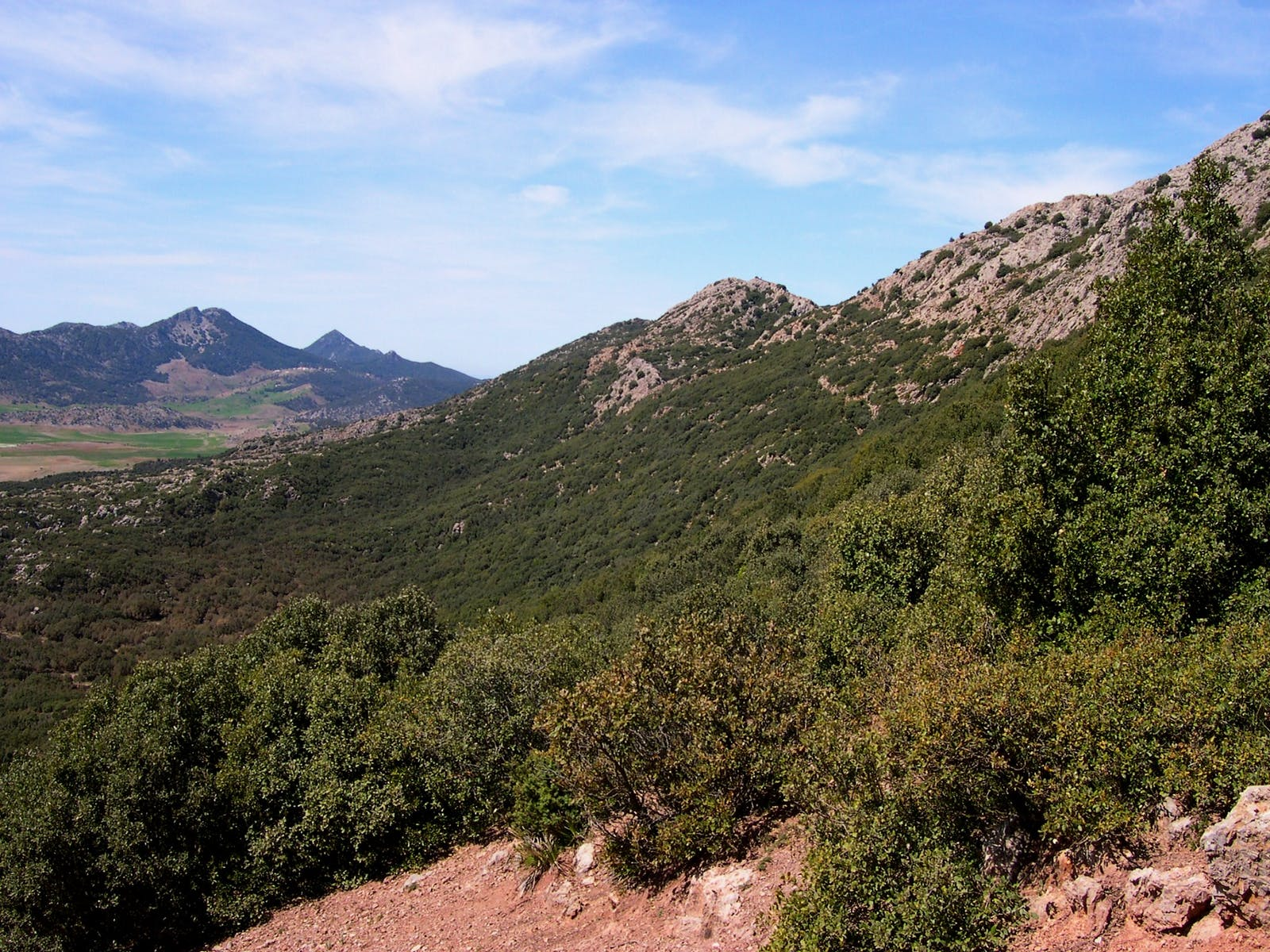 Mediterranean Woodlands and Forests