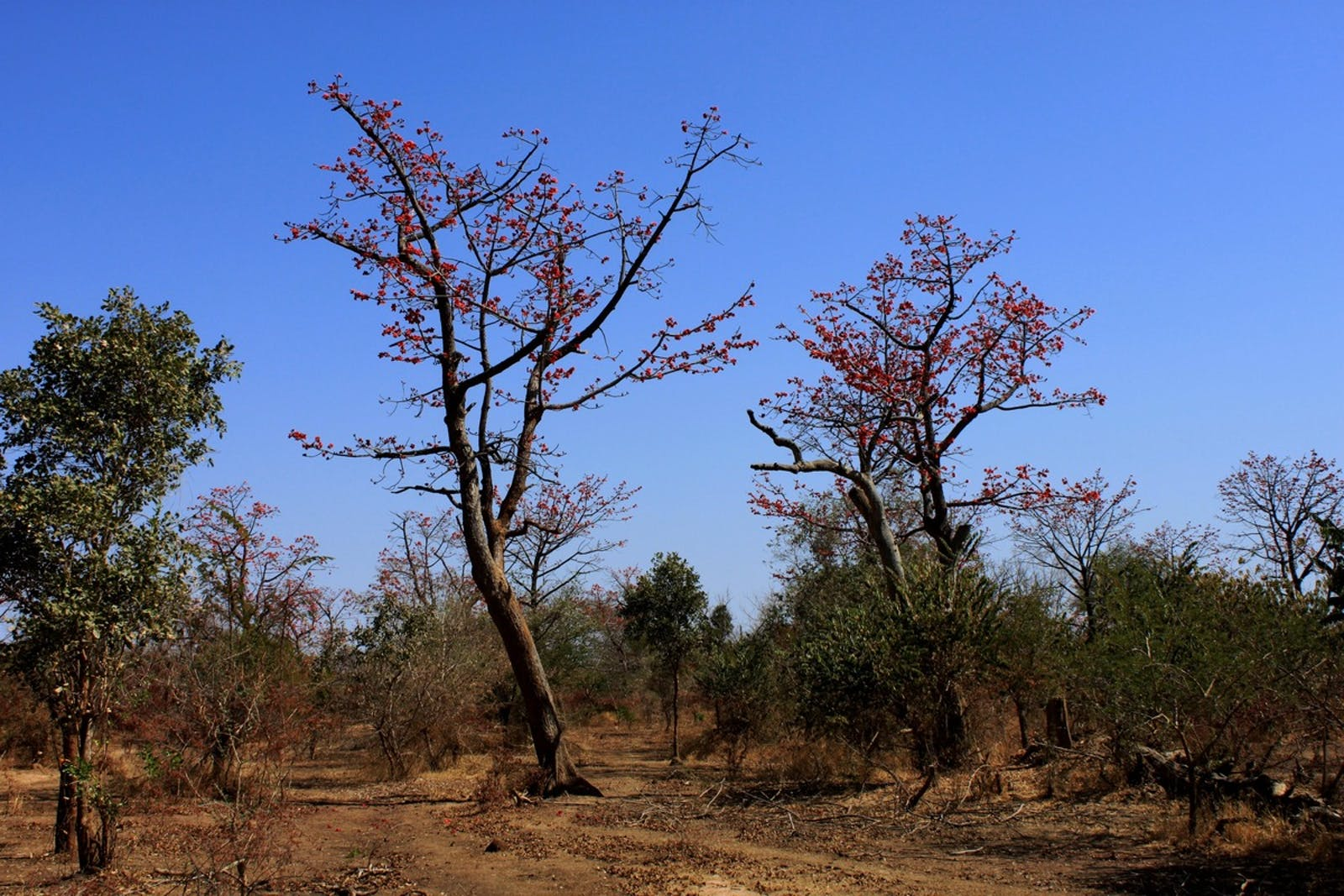 West Sudanian Savanna