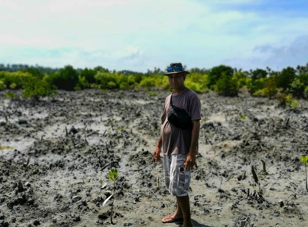 Reforested mangroves can save an Indigenous community from disappearing