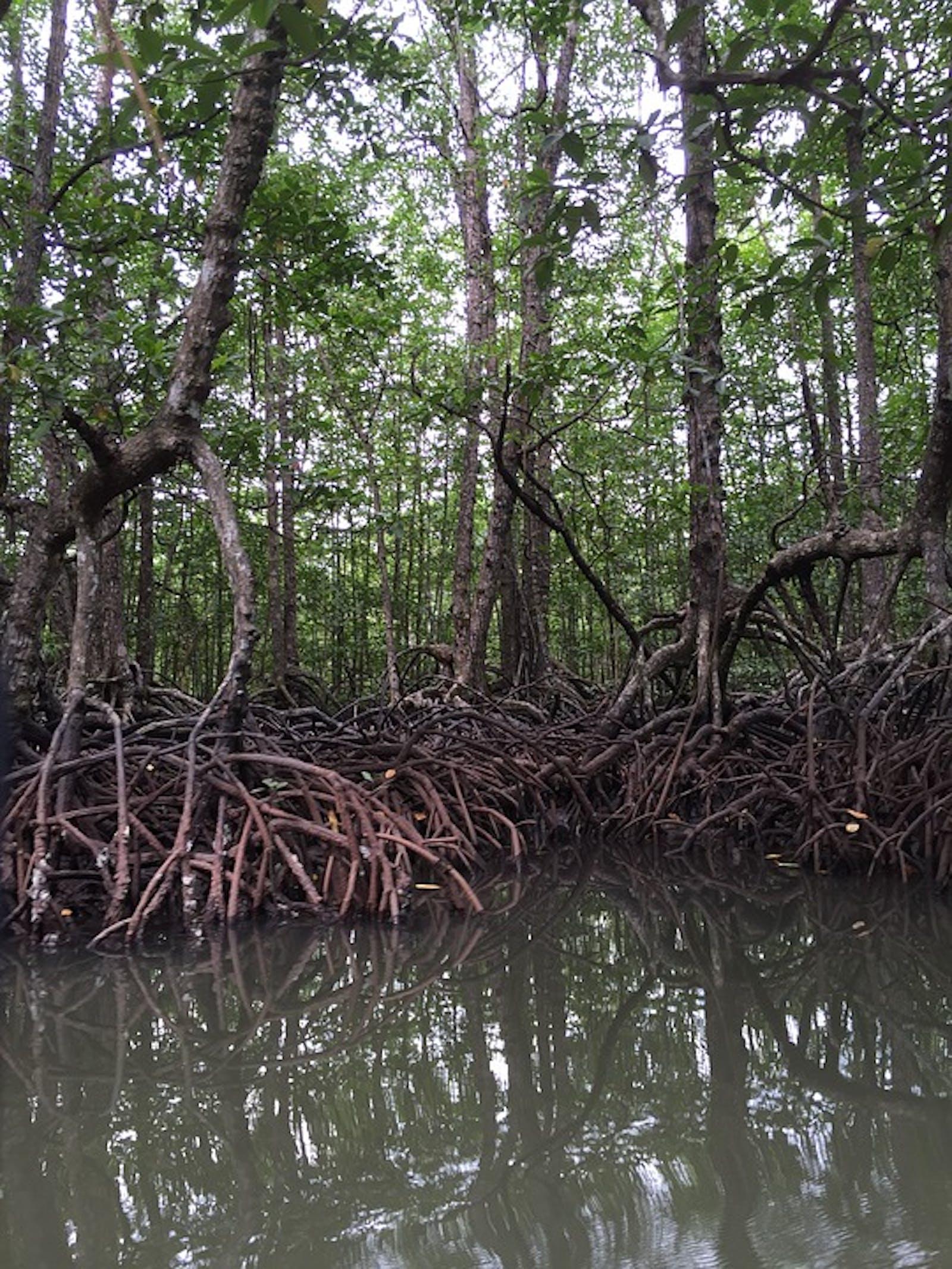 Sunda Shelf Mangroves