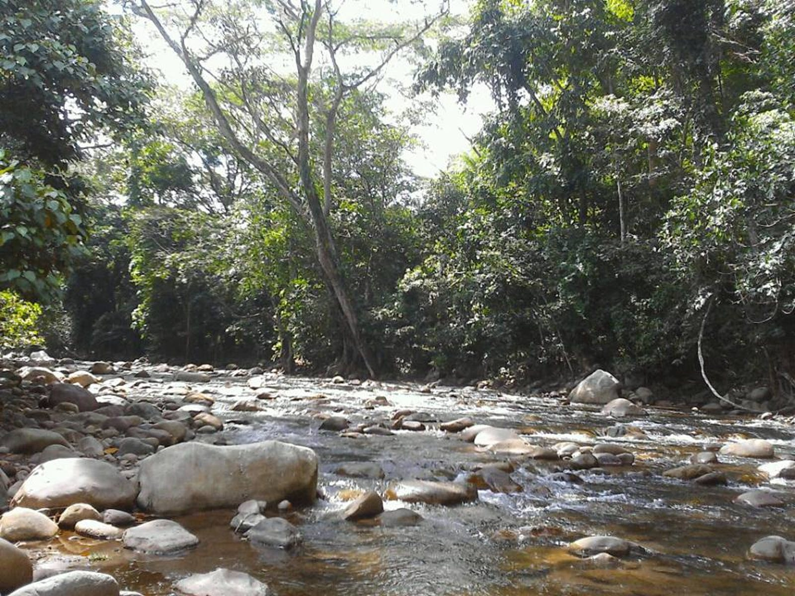 Cordillera Oriental Montane Forests