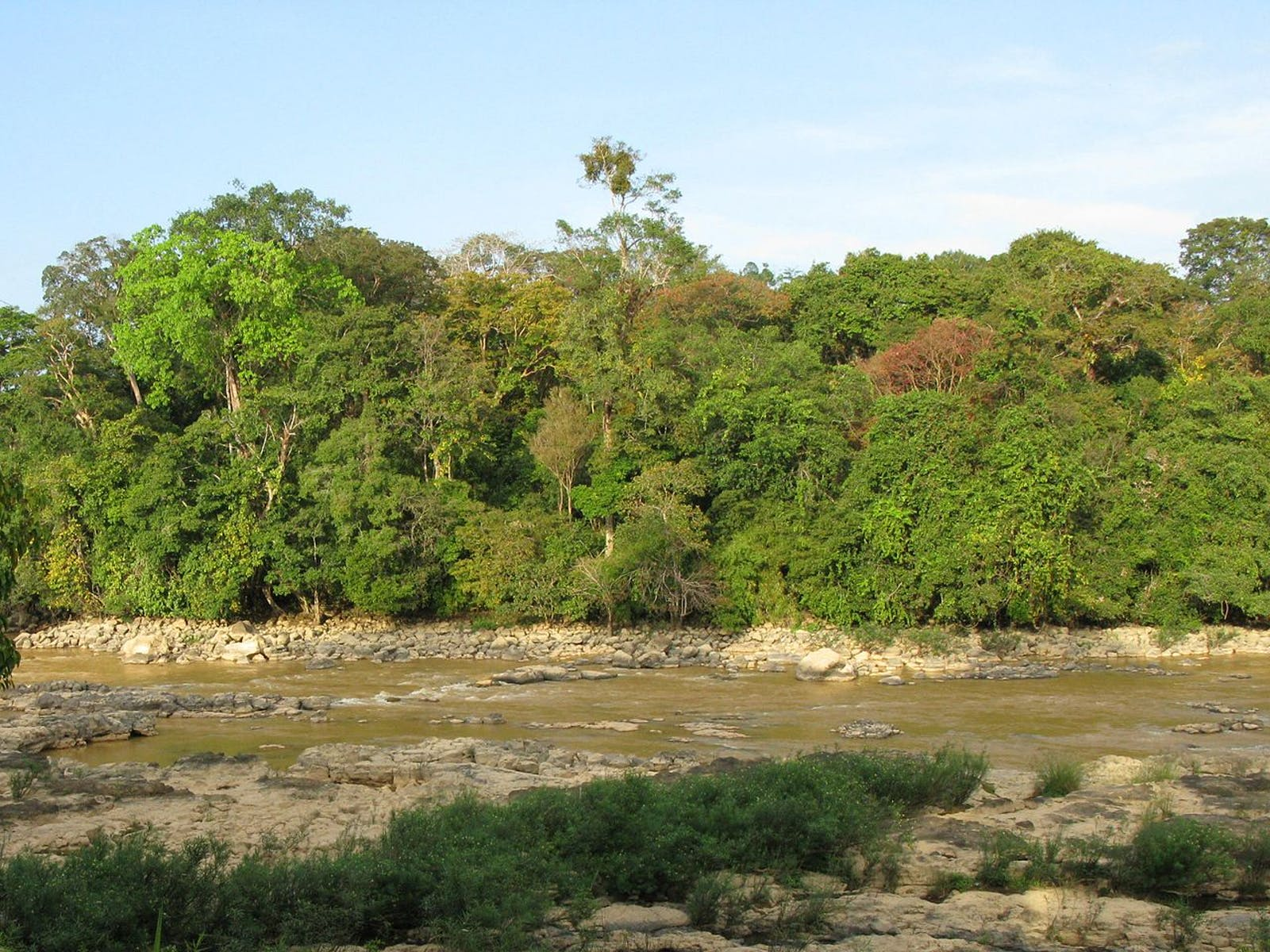 Southeastern Indochina Dry Evergreen Forests