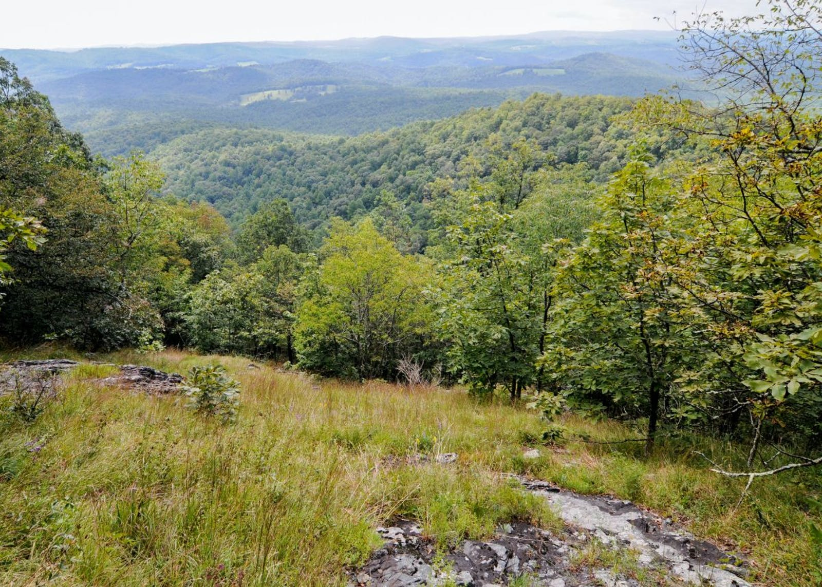 Appalachian Piedmont Forests