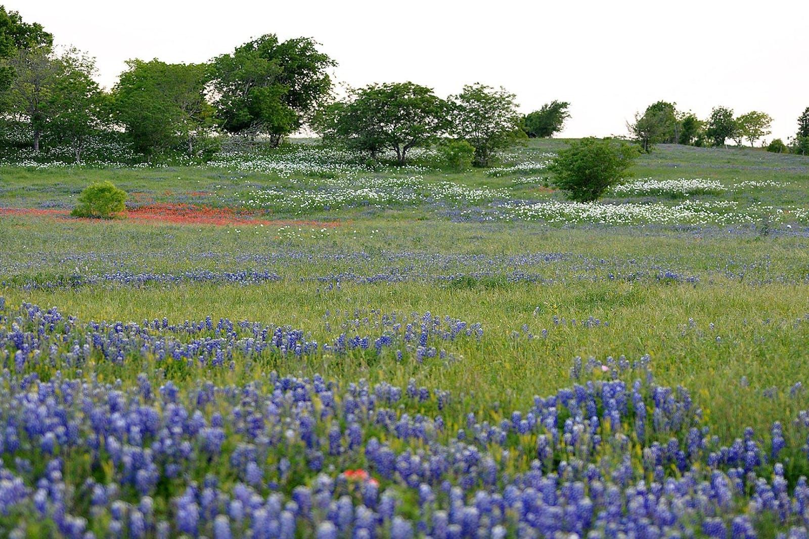 Texas Blackland Prairies