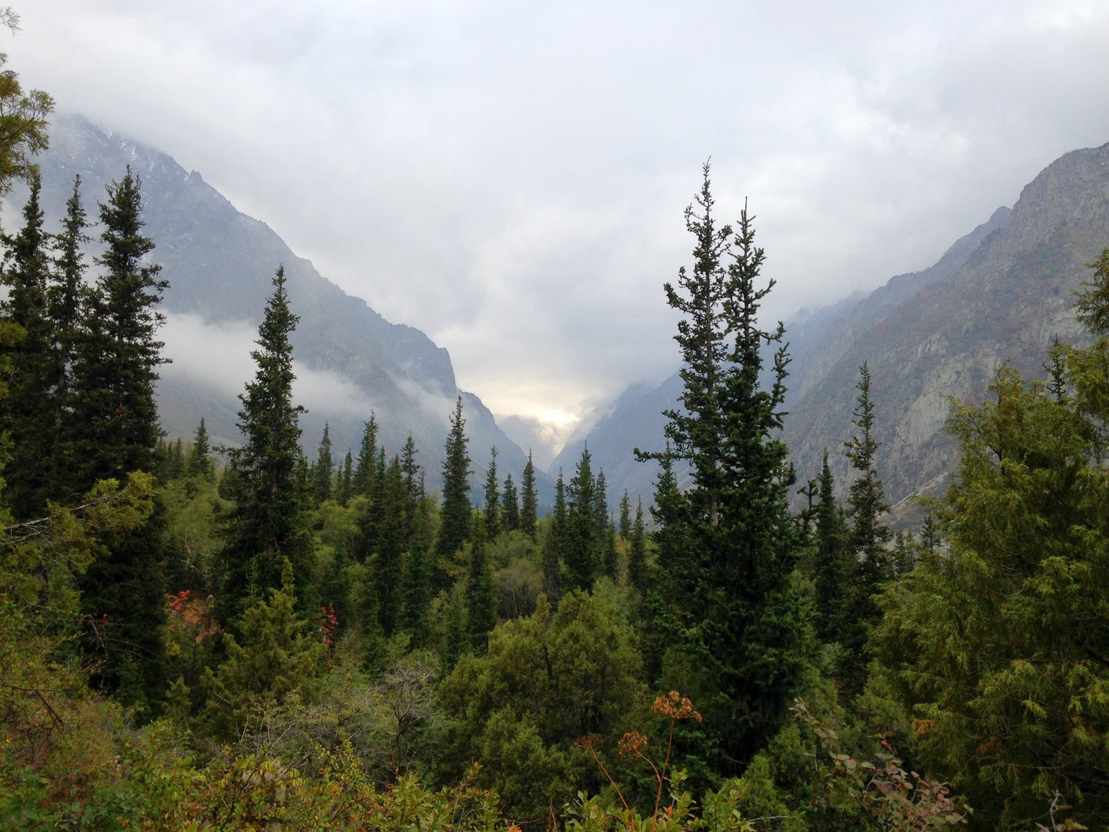 Tian Shan Montane Conifer Forests
