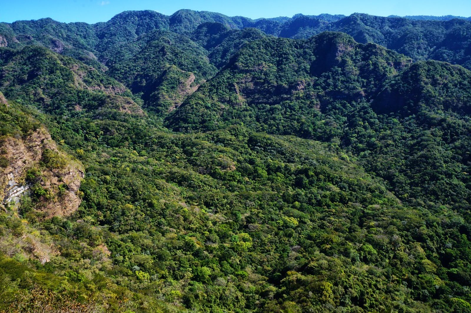 Central American Montane Forests