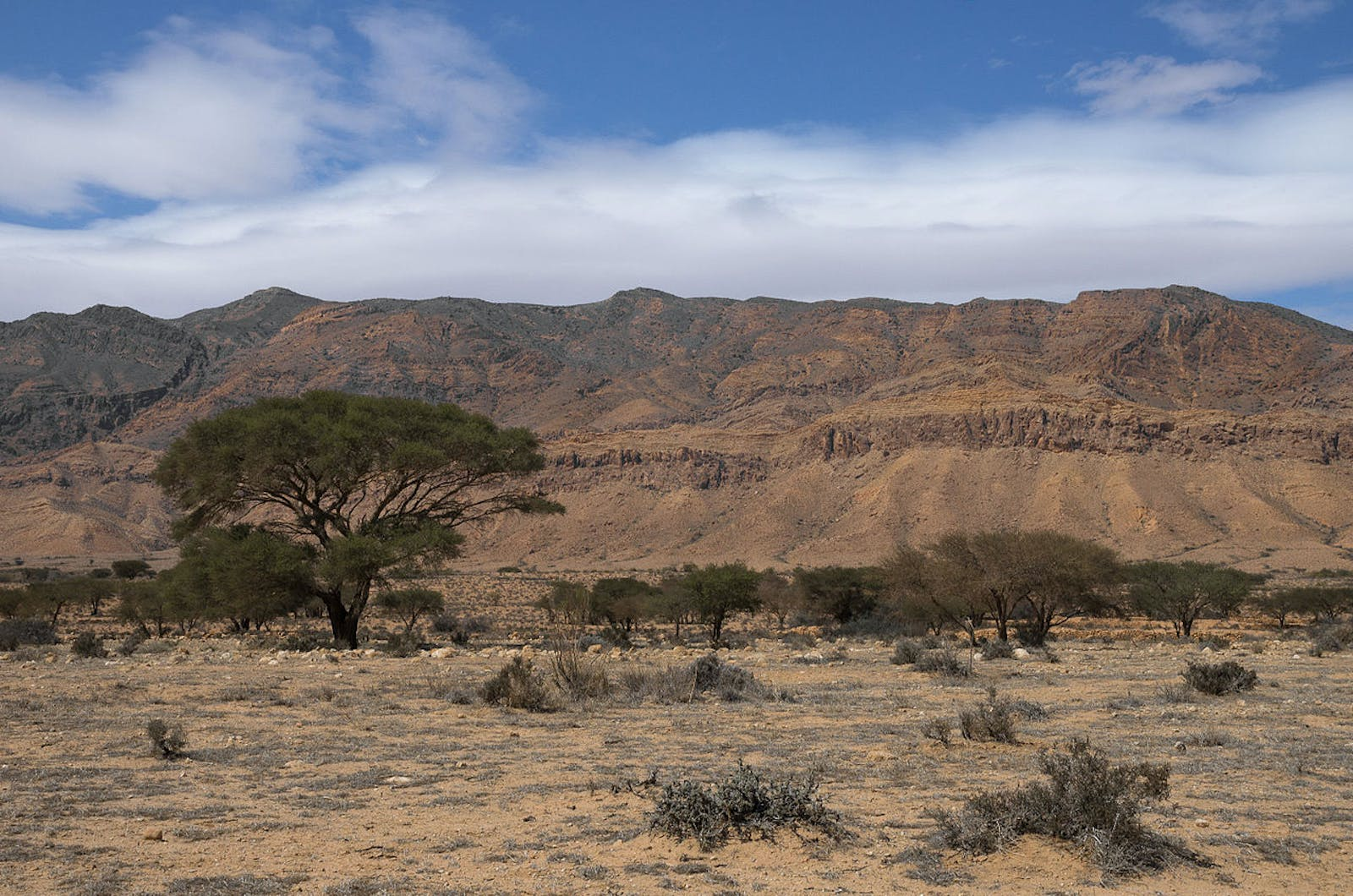 Mediterranean Dry Woodlands and Steppe