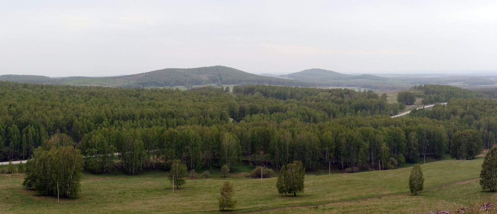 Western Siberian Hemiboreal Forests
