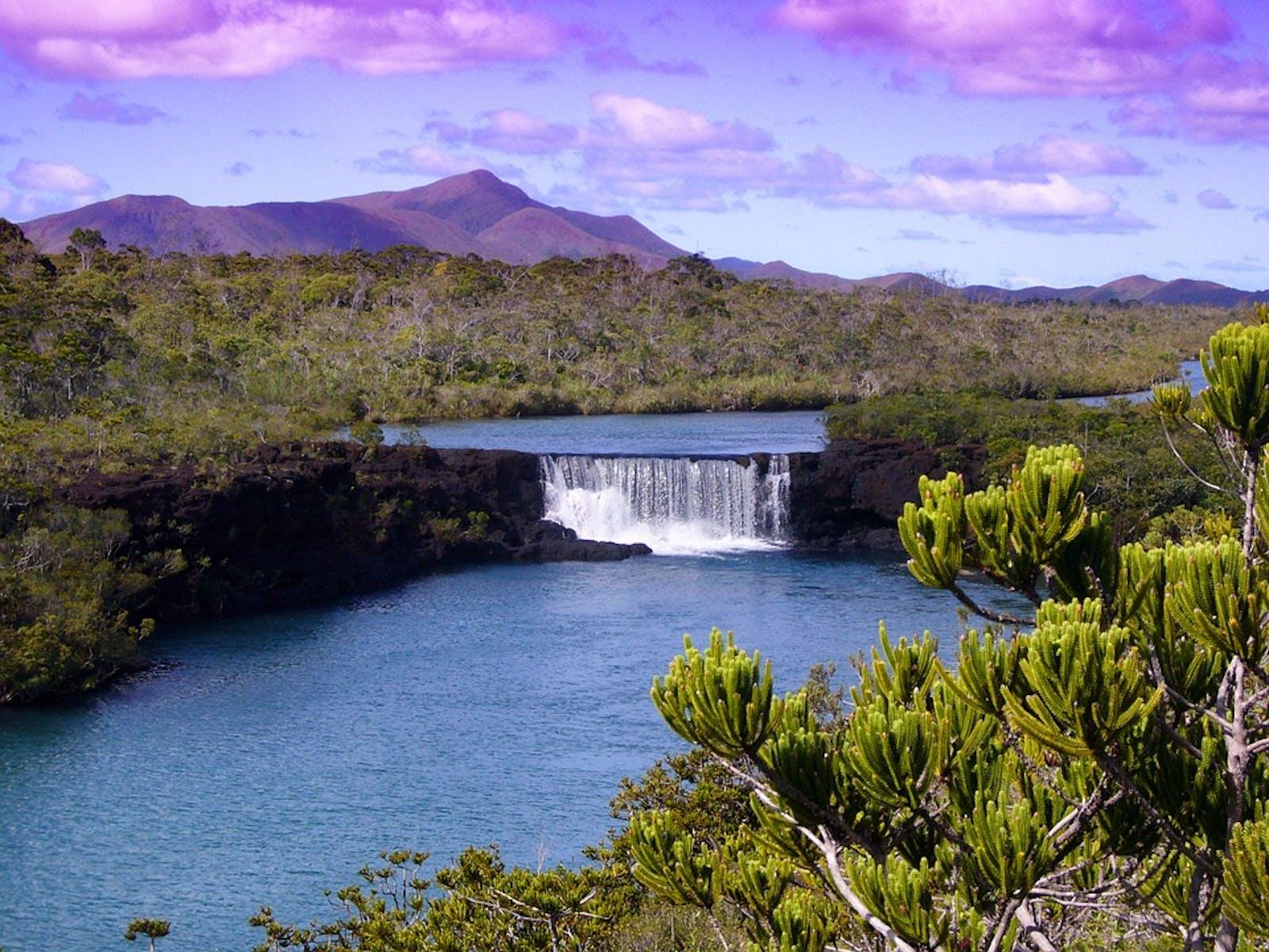 New Caledonia Rainforests
