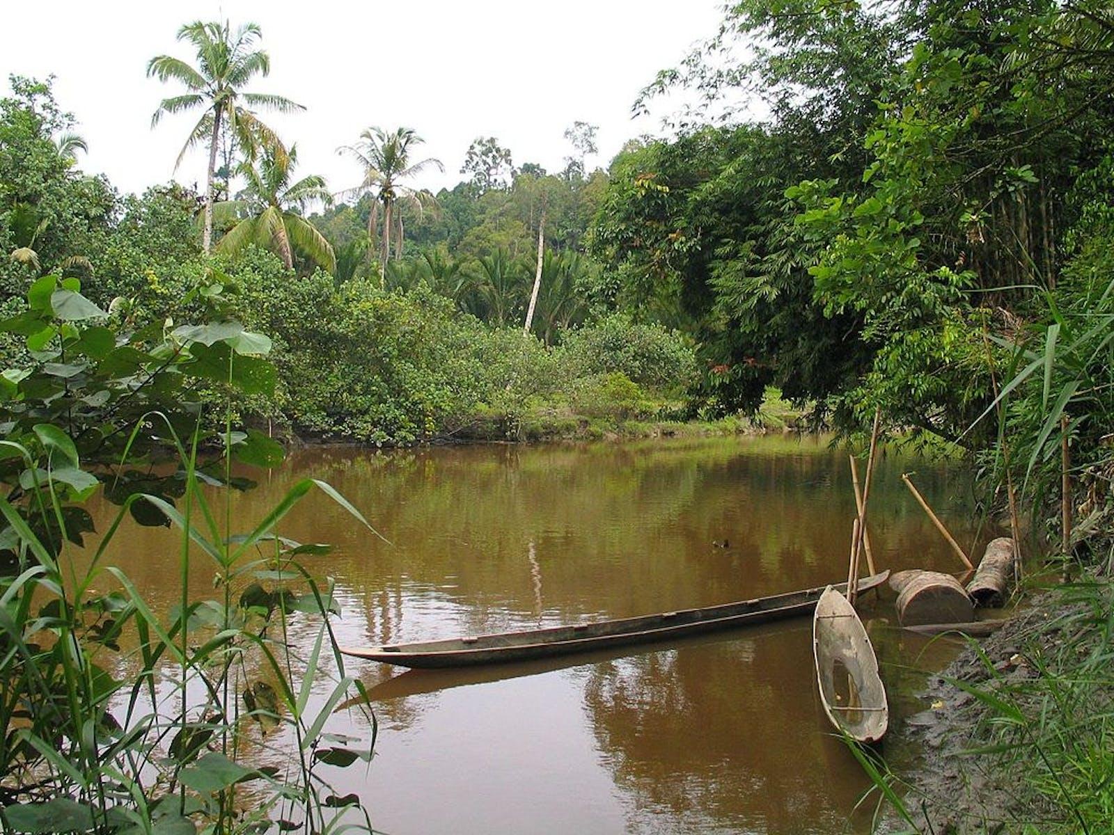 Mentawai Islands Rainforests
