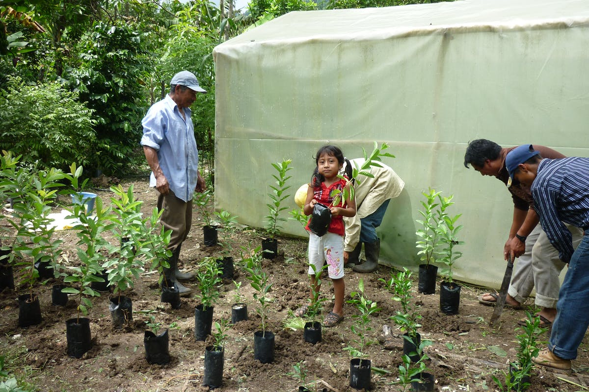 Achieving Food Sovereignty for Mayan Farmers through Agroecology