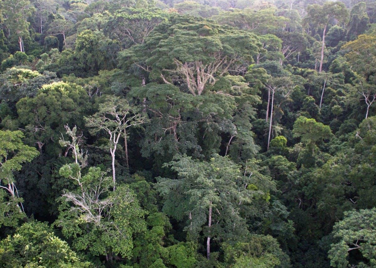 Promoting Indigenous livelihoods in the Congo Basin through Restoration