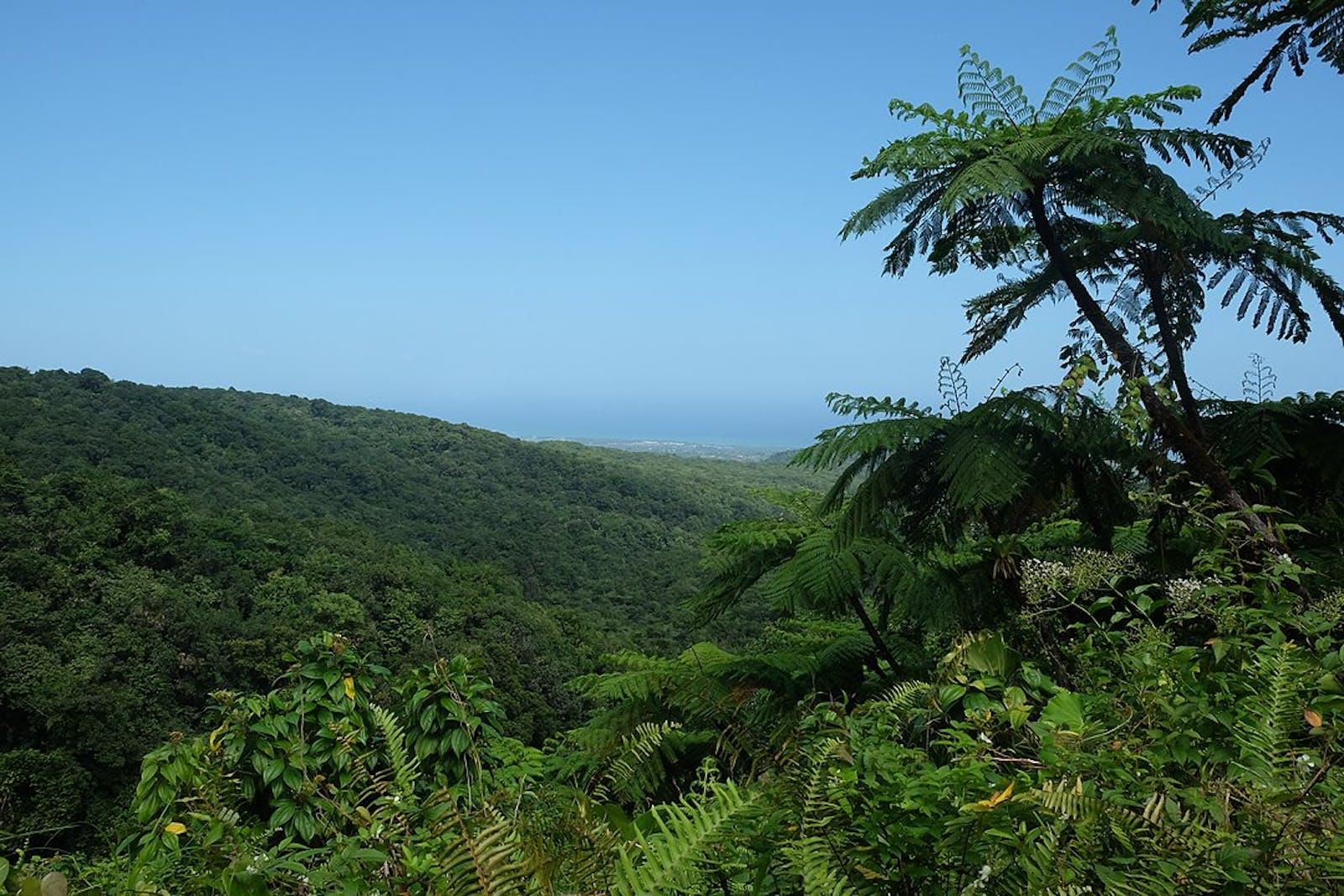 Leeward Islands Moist Forests