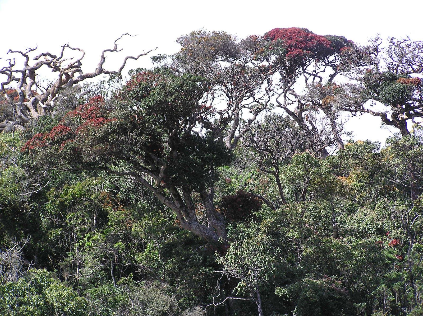 Sri Lanka Montane Rainforests