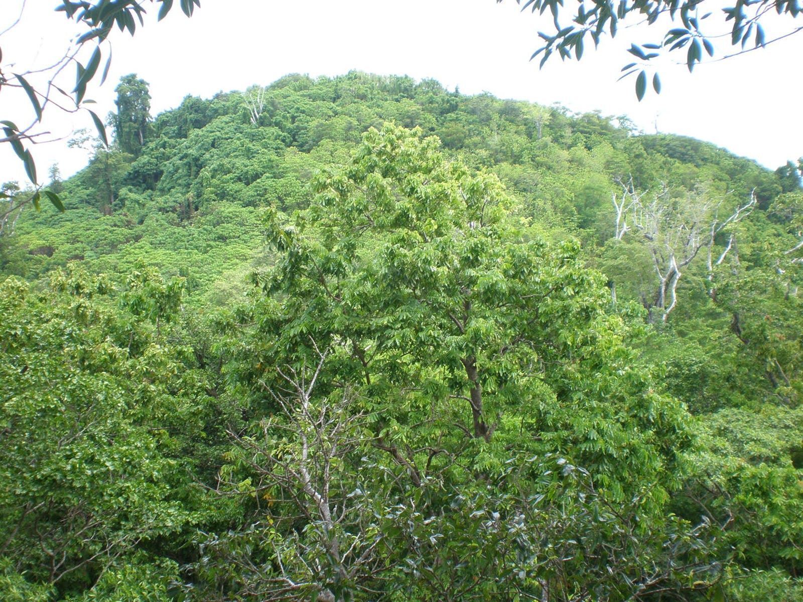 Central Polynesian Tropical Moist Forests