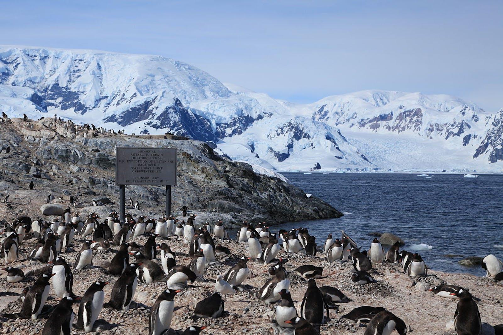 Northwest Antarctic Peninsula Tundra