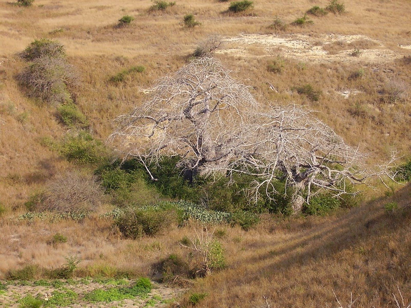 Angolan Scarp Savanna and Woodlands