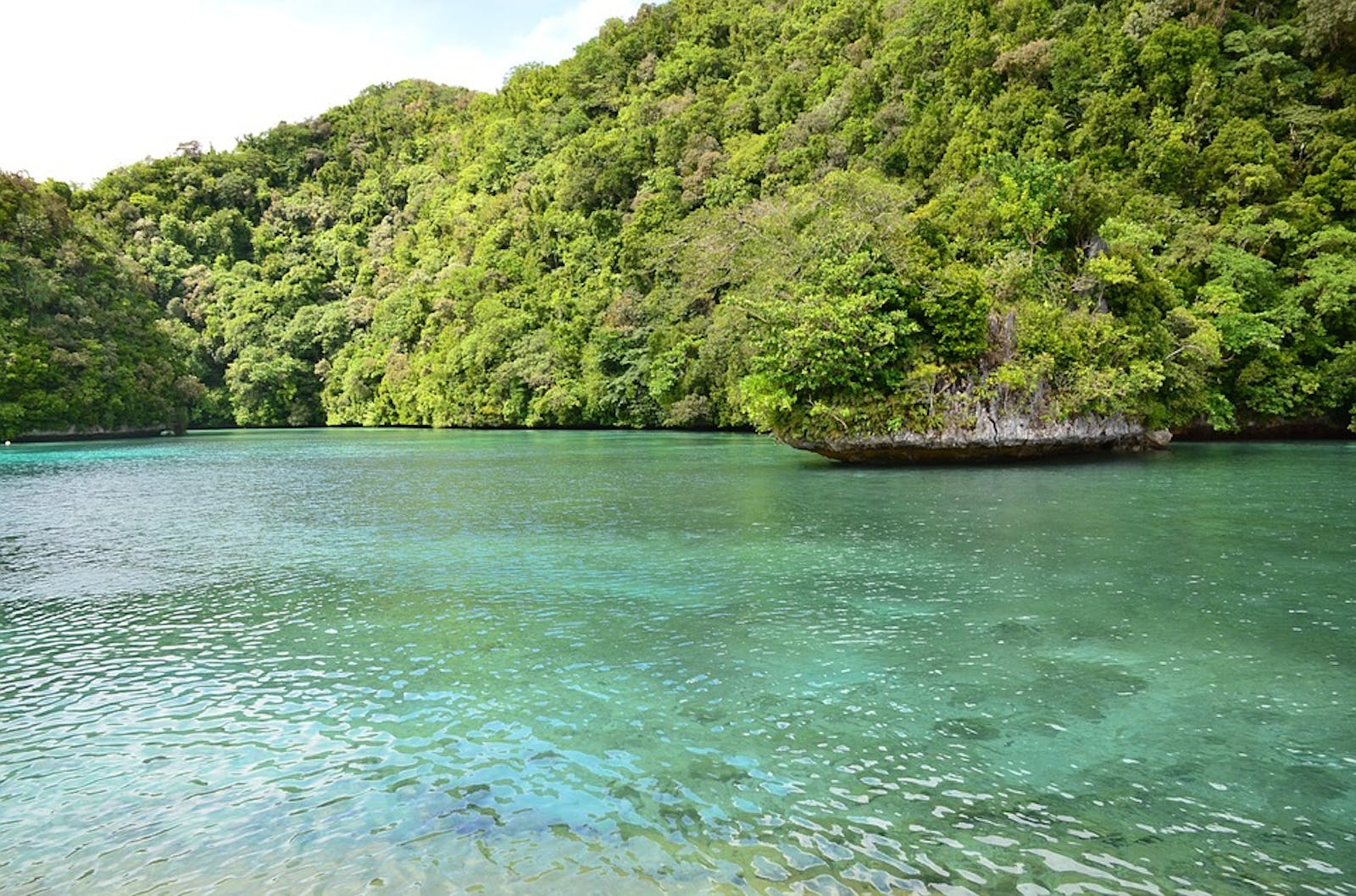 Palau Tropical Moist Forests