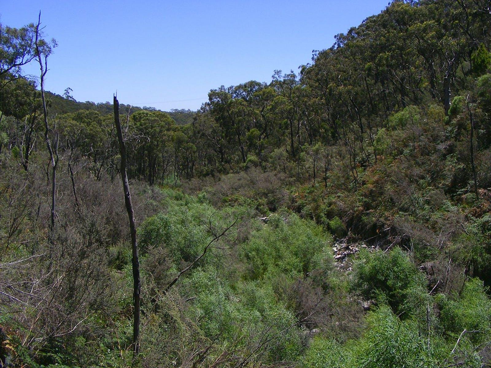 Flinders-Lofty Montane Woodlands