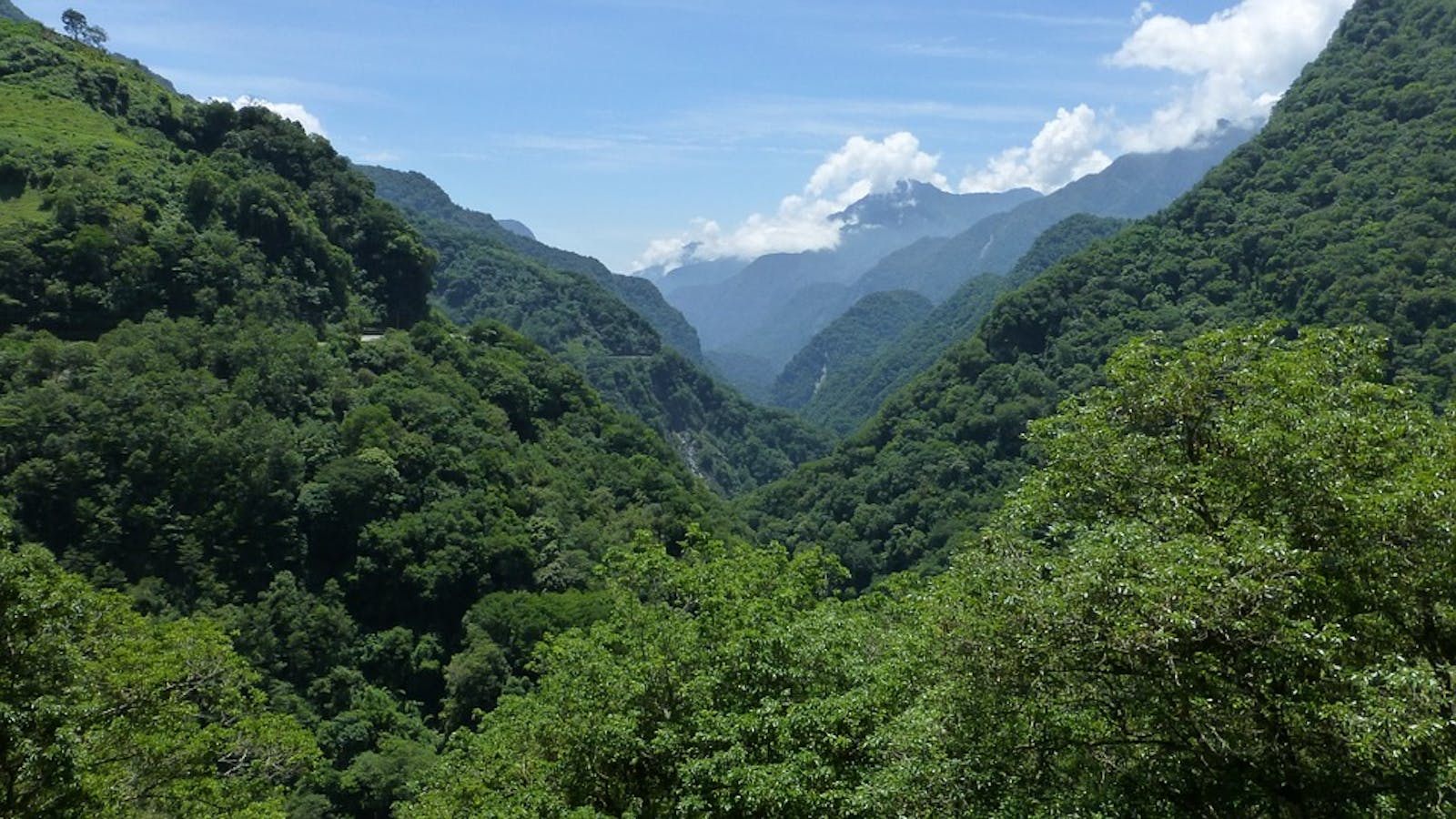 Taiwan Subtropical Evergreen Forests
