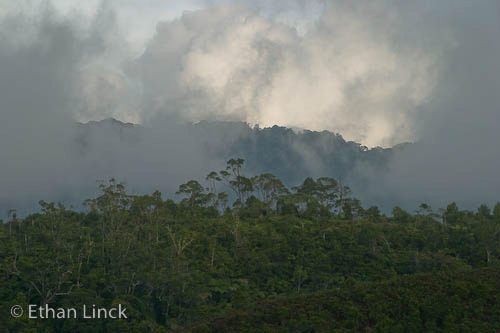 New Britain-New Ireland Montane Rainforests