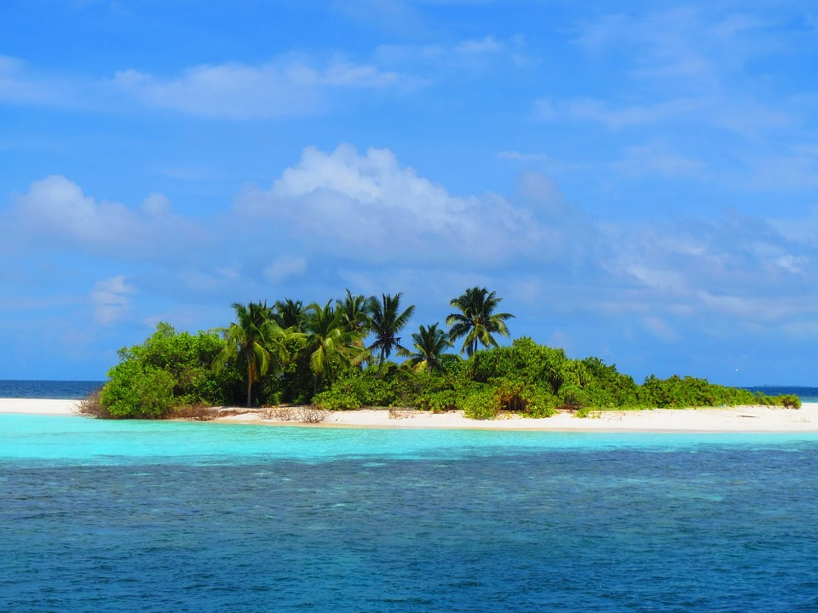 Maldives-Lakshadweep-Chagos Archipelago Tropical Moist Forests