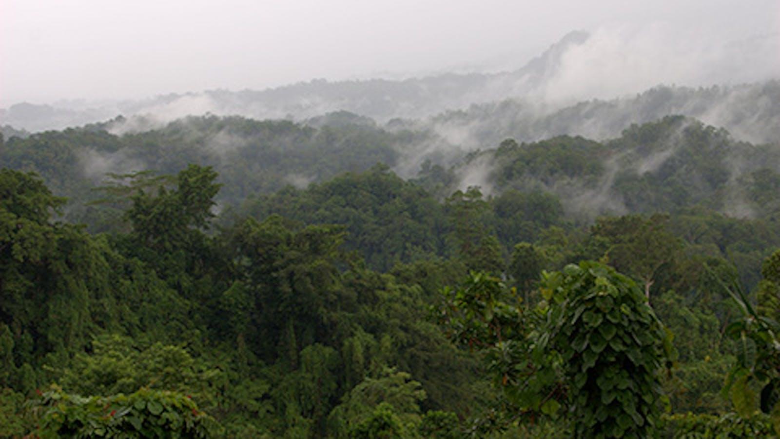Admiralty Islands Lowland Rainforests