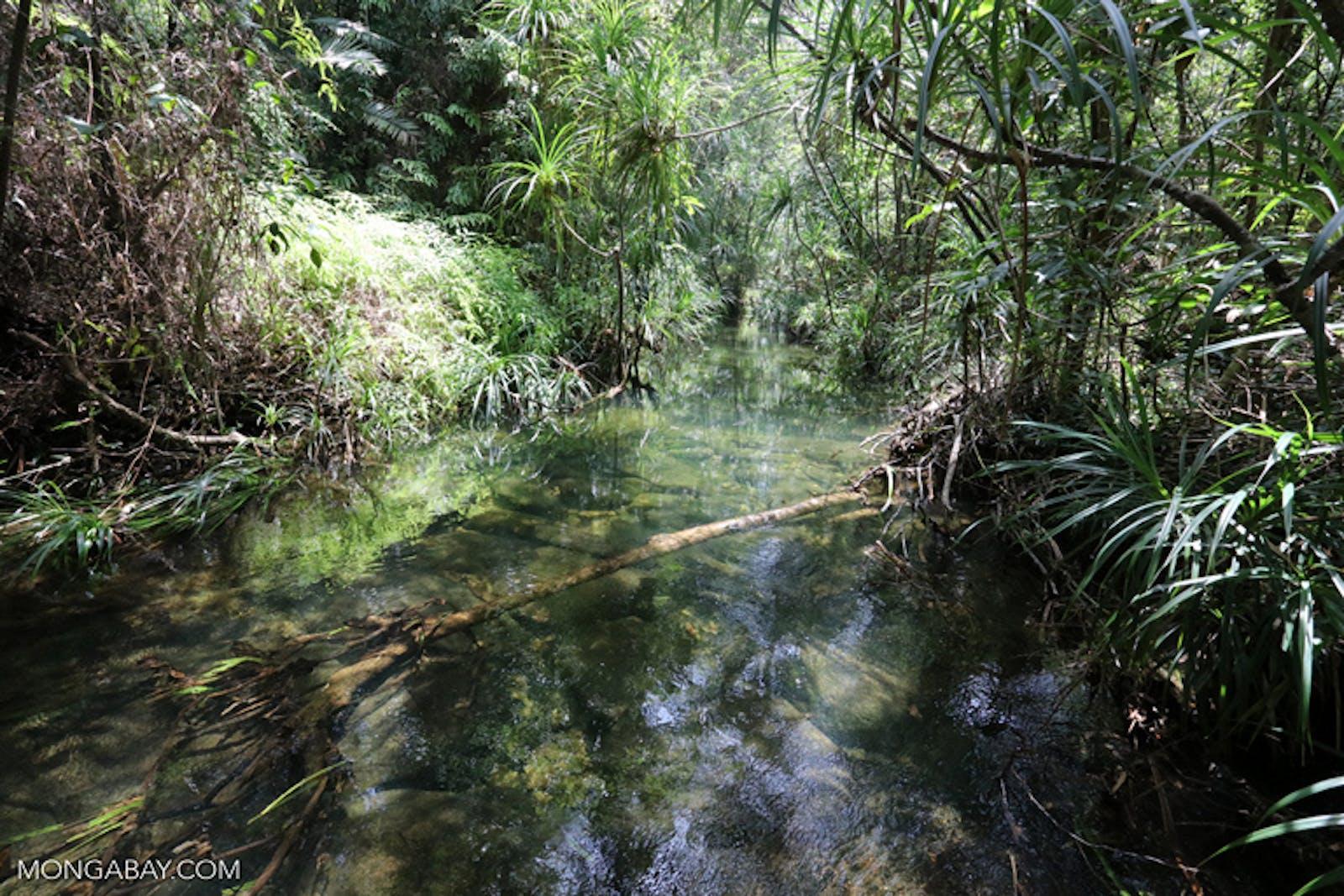 Cardamom Mountains Rainforests