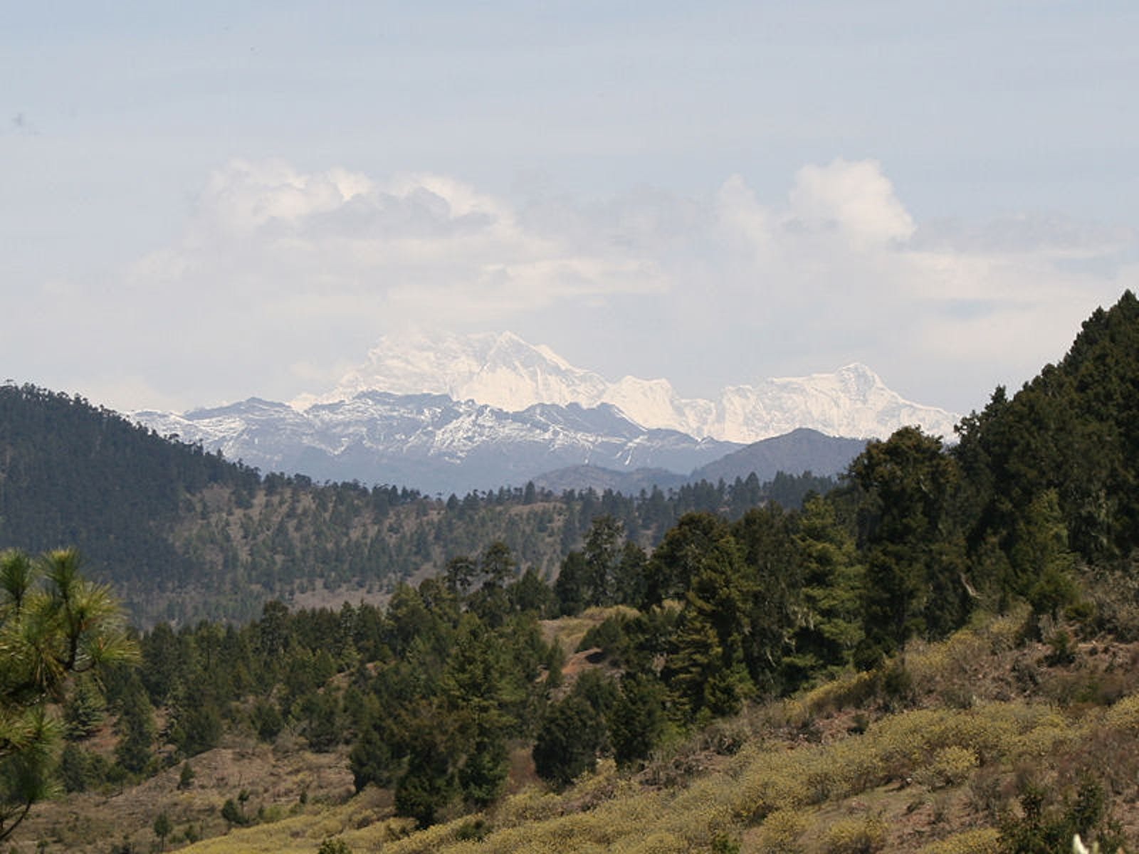 Eastern Himalayan Subalpine Conifer Forests