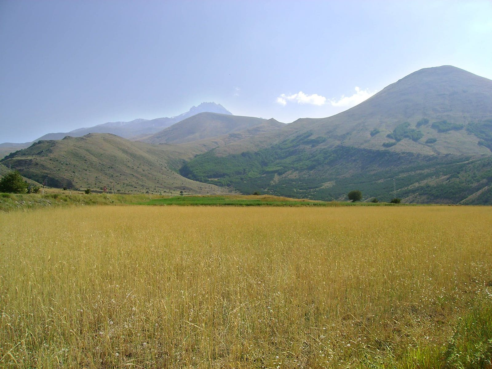 Central Anatolian Steppe and Woodlands
