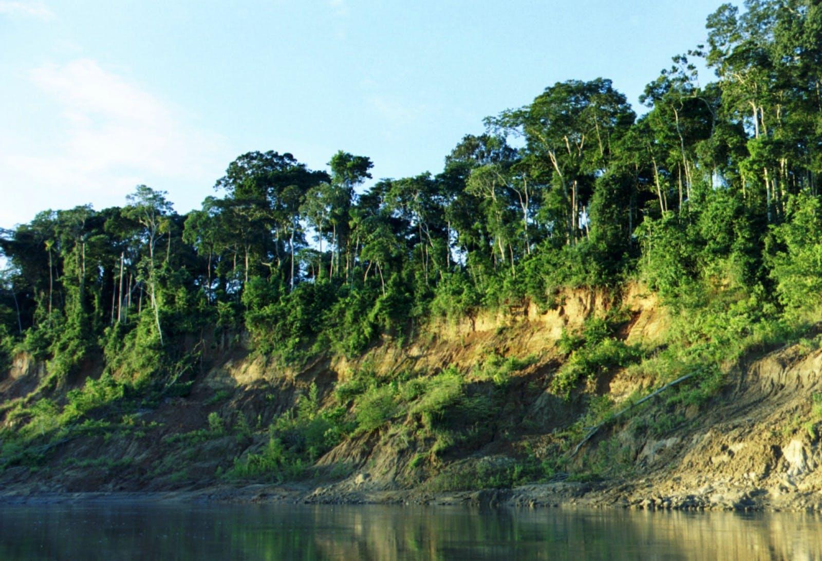 Southwest Amazon Moist Forests