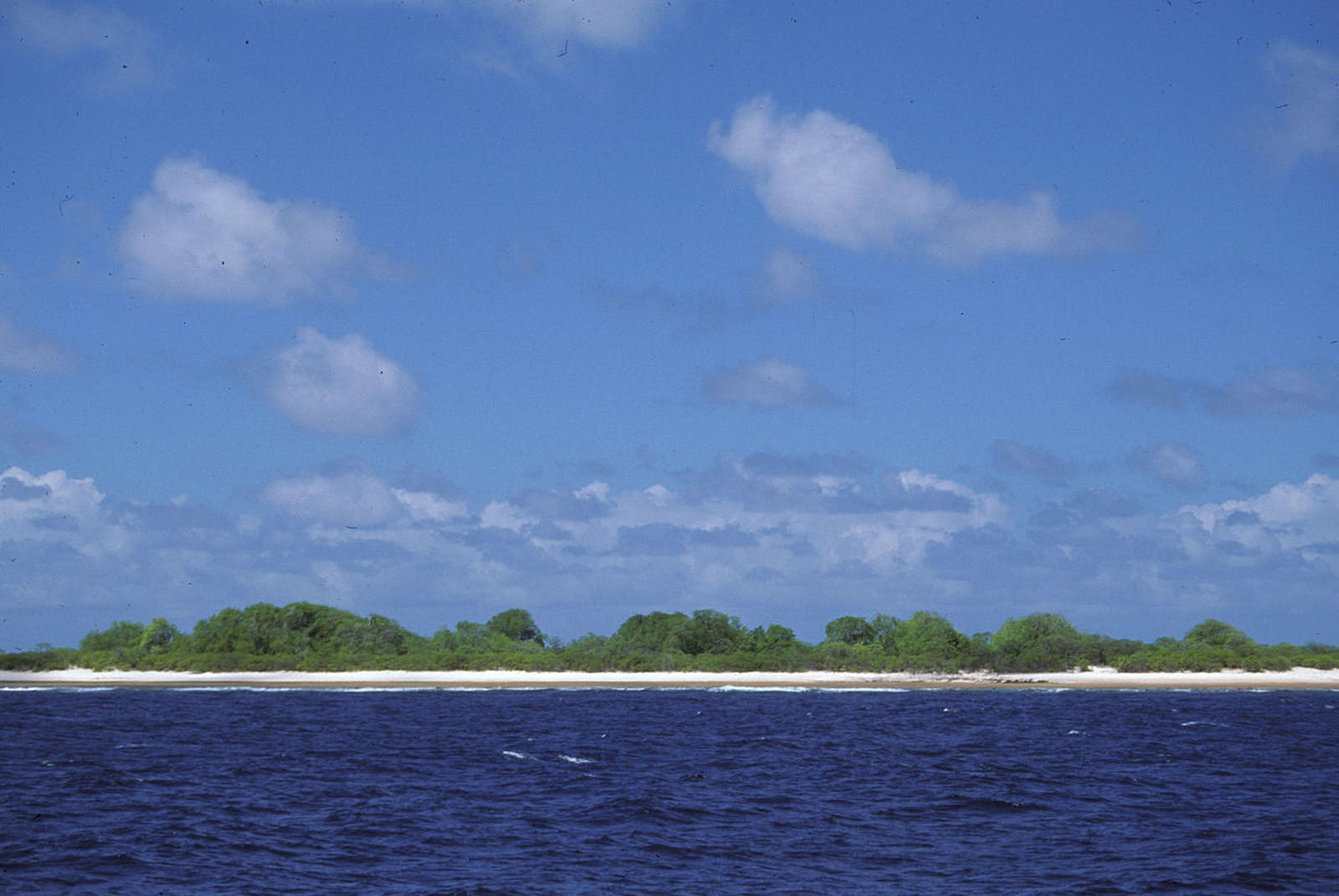 Western Polynesian Tropical Moist Forests
