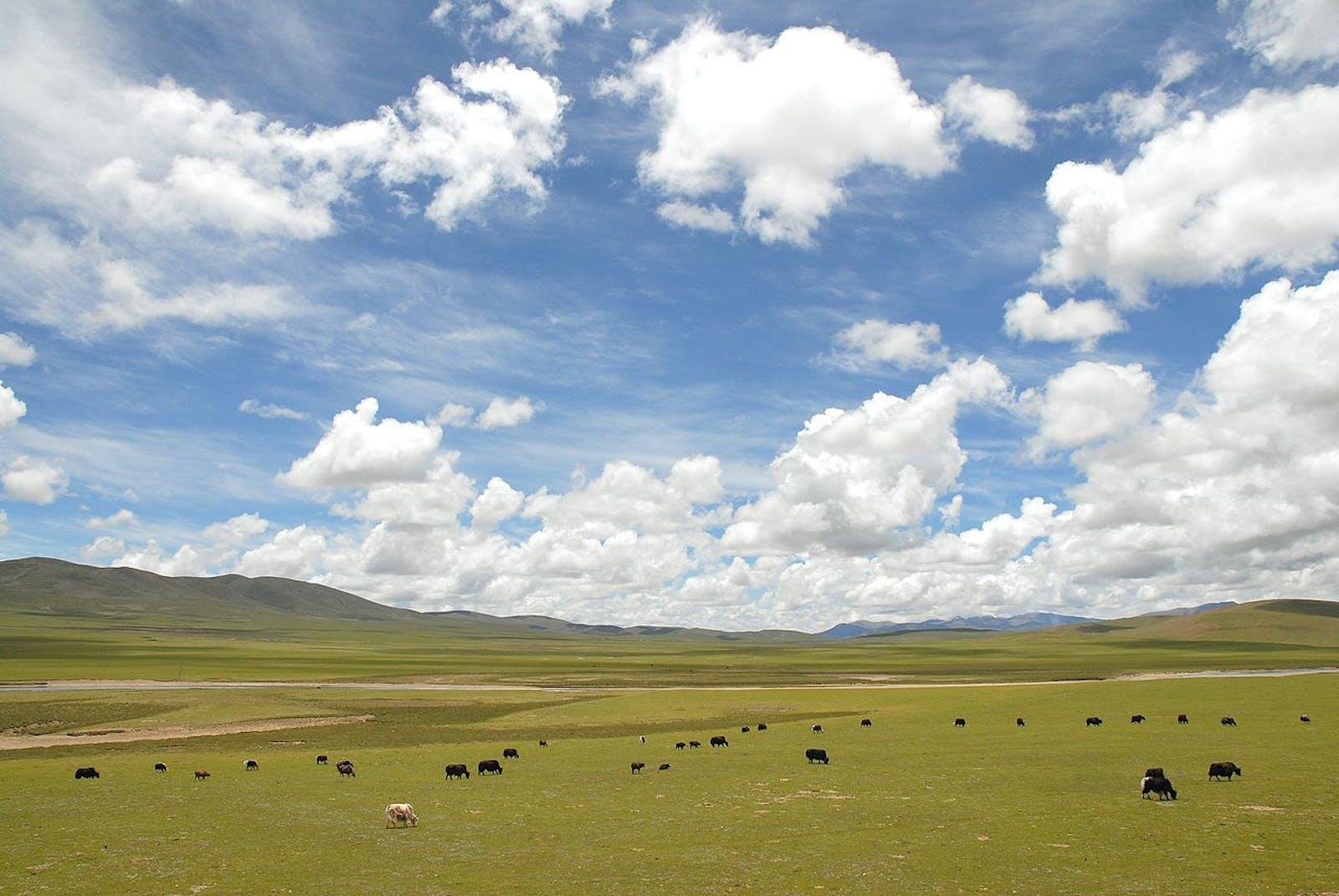Tibetan Plateau Alpine Shrublands and Meadows