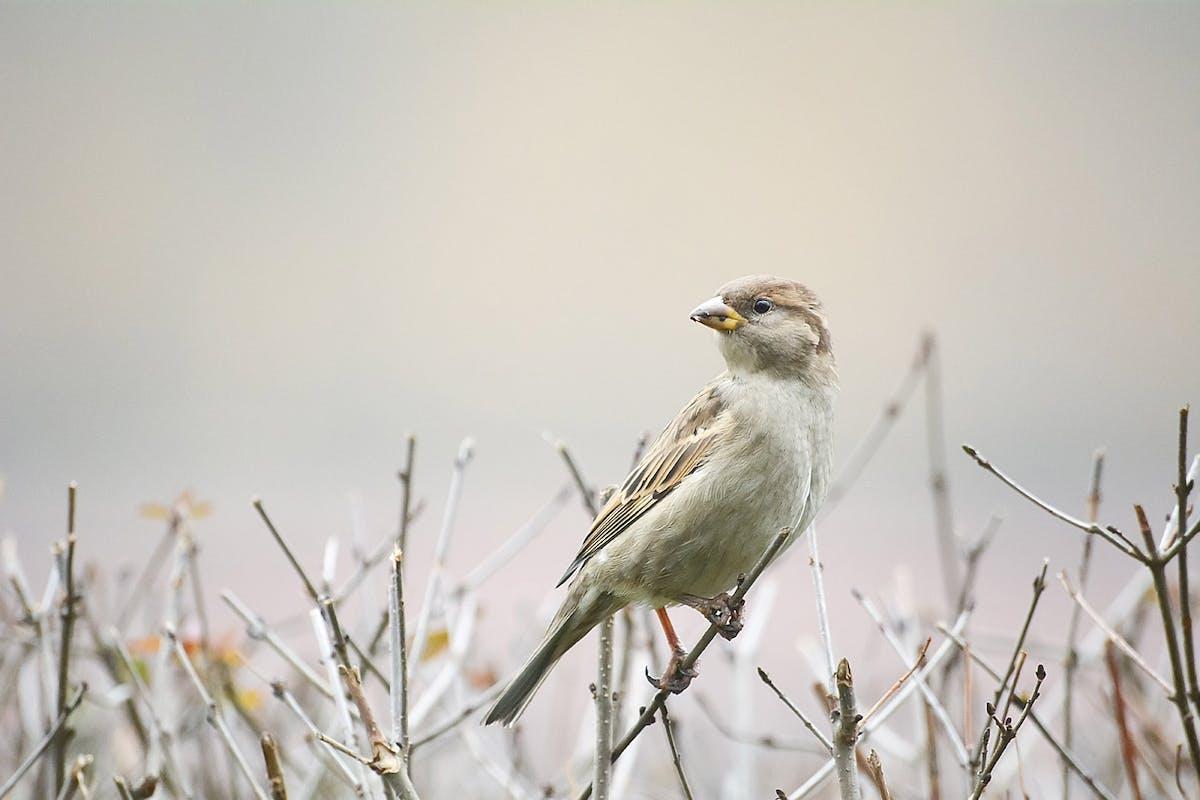 How birds shape the landscape