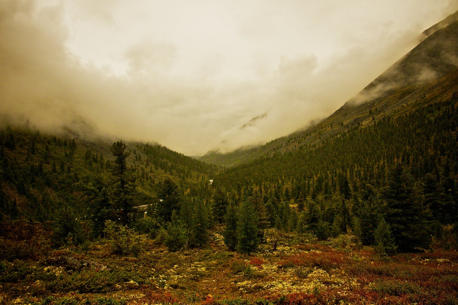 Sayan Montane Conifer Forests