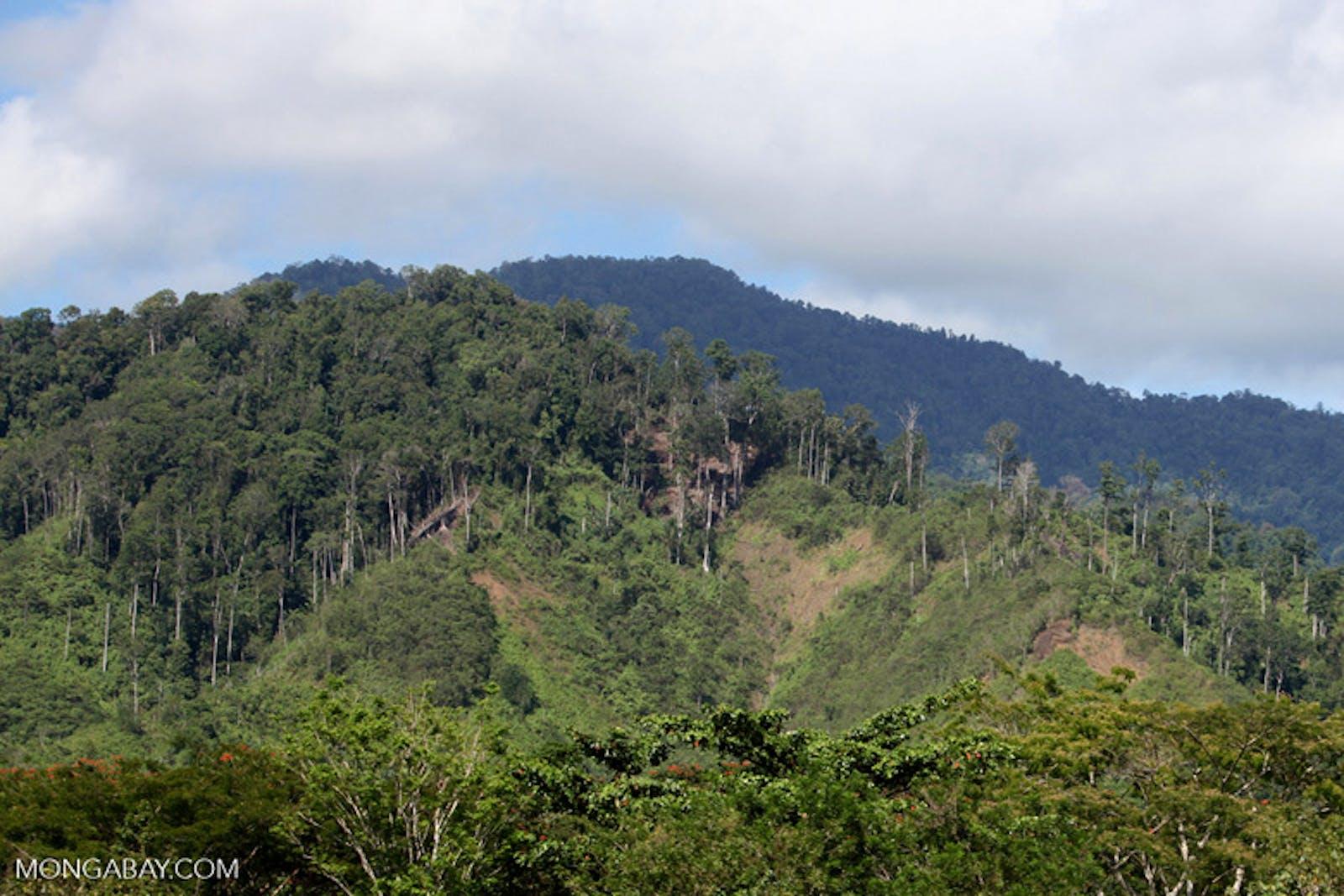 Vogelkop-Aru Lowland Rainforests