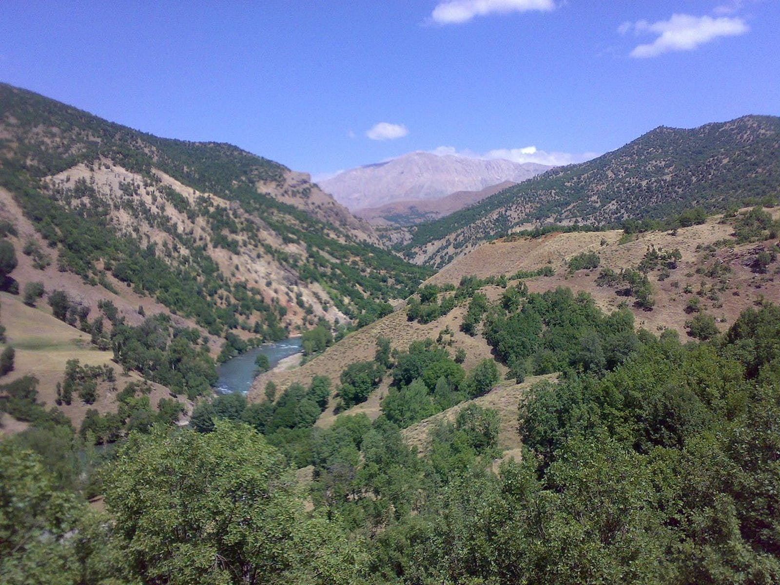 Eastern Anatolian Deciduous Forests